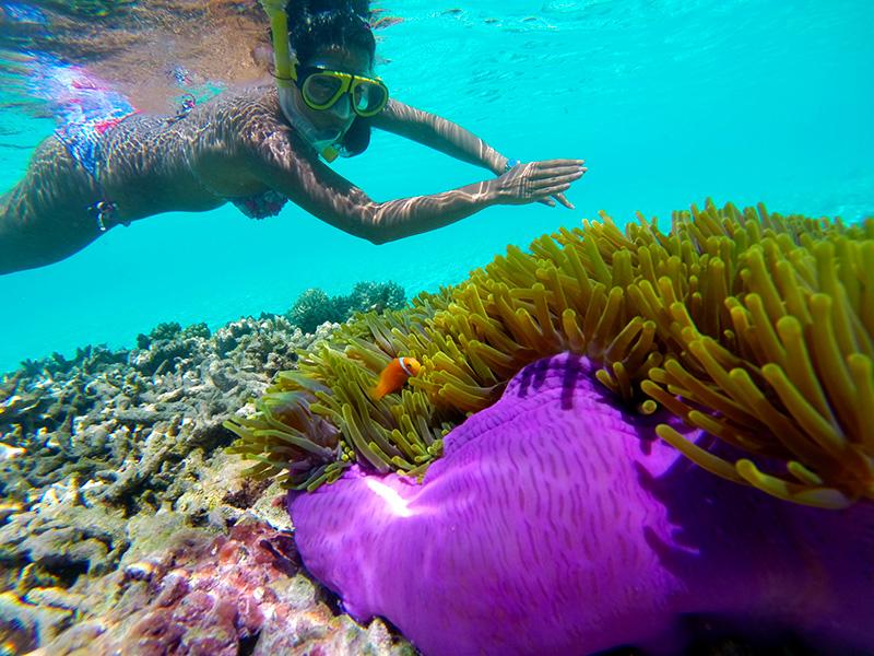 Hi Nemo! Herrlich, nicht wahr? W Retreat and Spa, Malediven.