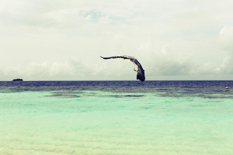 W Retreat and Spa Malediven - Fauna