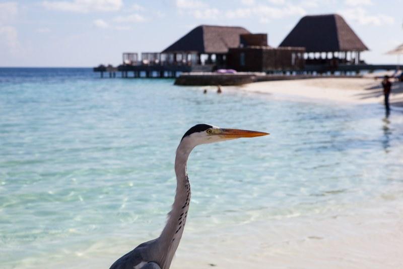 W Retreat and Spa Malediven, Fauna